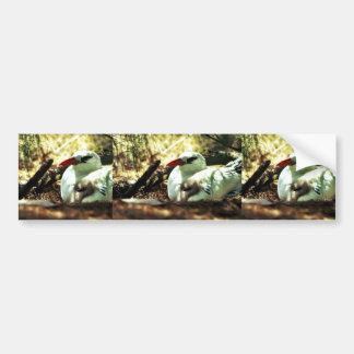 Tropicbird Rojo-atado y polluelo Pegatina Para Auto