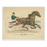Trotting stallion Palo Alto by Electioneer (1791A) Print