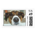 Trouble the Jack Russell Terrier Dog Postage