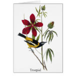 Troupial - John James Audubon Card