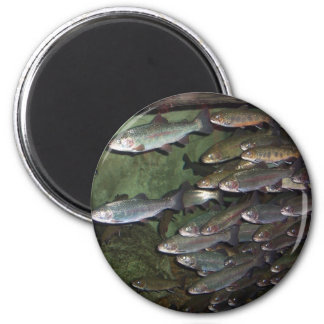 Trout 2 Inch Round Magnet