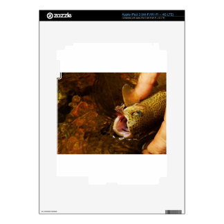 Trout and Fly iPad 3 Skin