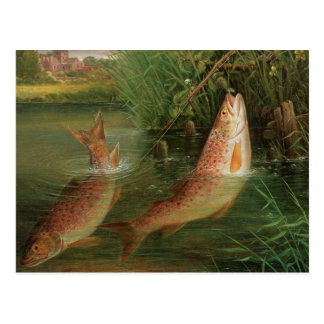 Trout at Winchester Postcard