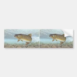 Trout, brook bumper sticker