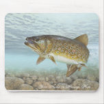 Trout, brook mouse pad