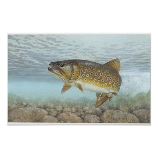 Trout, brook posters