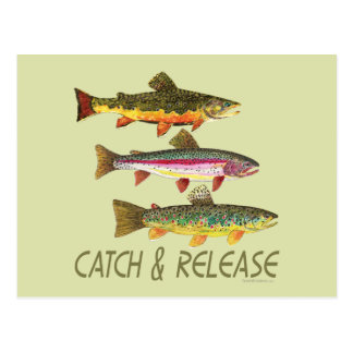 Trout Catch and Release Postcard