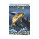 Trout Fishing Cross-Section - Wenatchee River, W Postcard