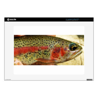 Trout in Hands Decal For Laptop
