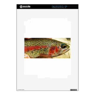 Trout in Hands Skin For The iPad 2