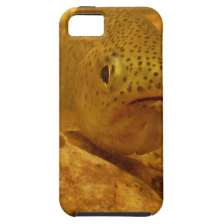 Trout in stream iPhone 5 covers