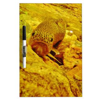 Trout in stream Dry-Erase board