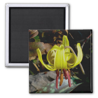 Trout Lily #1 Magnet