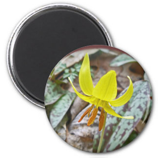 Trout Lily Wildflower - Erythronium americanum Magnet
