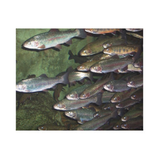 Trout Stream Stretched Canvas Prints