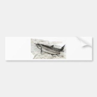 Trout takes the bait bumper sticker