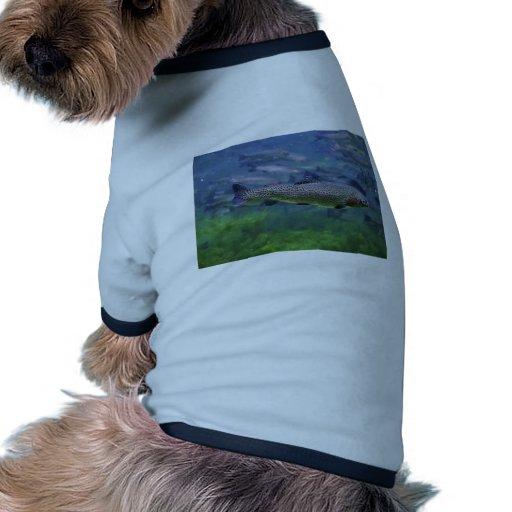 Trucha arco iris camisa de perrito