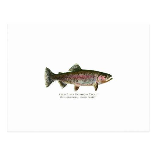 Trucha arco iris del río de Núcleo de condensación Postal