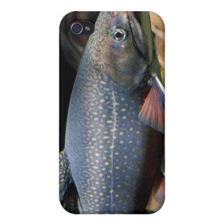 Trucha de arroyo - cubierta del iPhone 4 4S iPhone 4 Protector