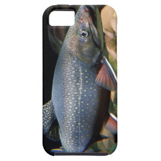 Trucha de arroyo - cubierta del iPhone 5 iPhone 5 Protectores
