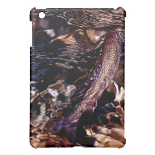 Trucha de arroyo en el río