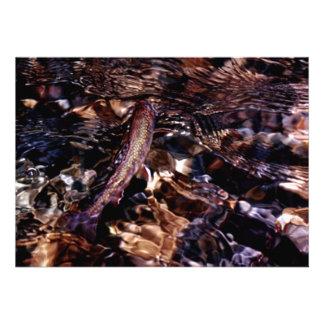 Trucha de arroyo en el río anuncio personalizado