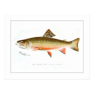 Trucha de arroyo masculina tarjeta postal
