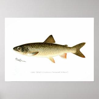 Trucha de lago póster