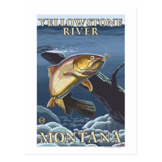 Trucha que pesca la sección representativa 5 tarjeta postal