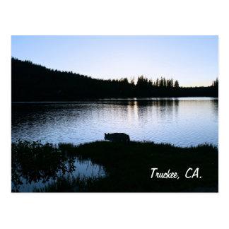 Truckee CA Postcard Coyote on Mountain Lake