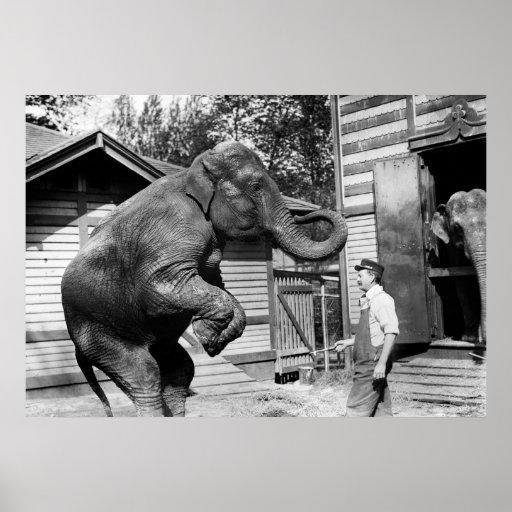 Truco del elefante, los años 10 poster