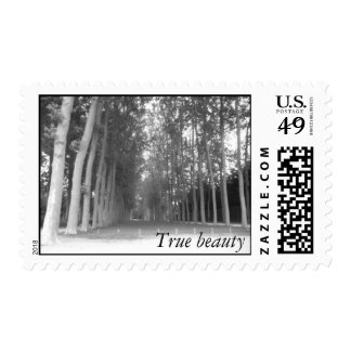 True beauty - Forest Stamp