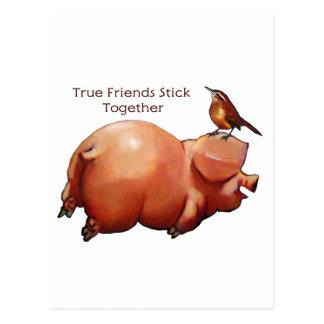 True Friends Stick Together: Cute Pig With Bird Postcards