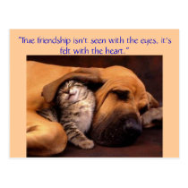 """True friendship ... Postcard"
