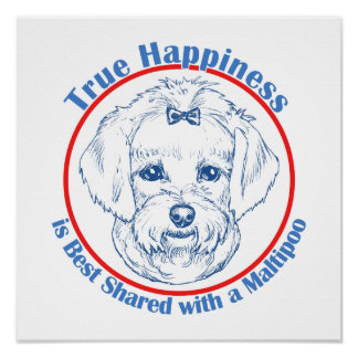 True Happiness with a Maltipoo Poster