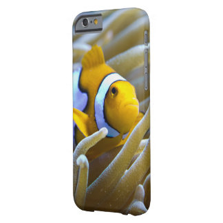 True Percula Clownfish in Anemone Barely There iPhone 6 Case