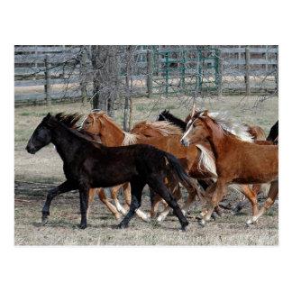 Trueno del caballo tarjetas postales
