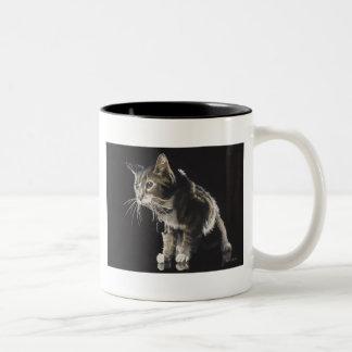 Trufas la acuarela del gato de Tabby Tazas
