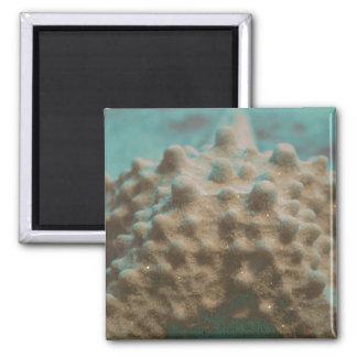trullo esquelético y black.jpg de las estrellas de imán cuadrado