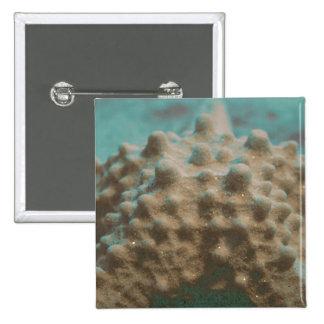 trullo esquelético y black jpg de las estrellas de pins