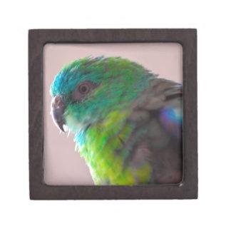 TRULLO EXÓTICO del PÁJARO del LORO Colorful-parrot Caja De Joyas De Calidad