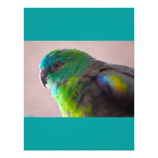 TRULLO EXÓTICO del PÁJARO del LORO Colorful-parrot Tarjeta Publicitaria