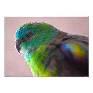 TRULLO EXÓTICO del PÁJARO del LORO Colorful-parrot Comunicados Personalizados