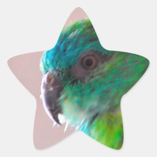 TRULLO EXÓTICO del PÁJARO del LORO Colorful-parrot Calcomania Forma De Estrella Personalizadas