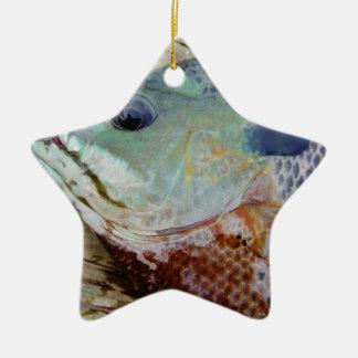 trullo púrpura amarillo azul, pescado del Lepomis  Ornatos