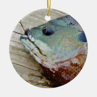 trullo púrpura amarillo azul, pescado del Lepomis  Ornamentos De Reyes