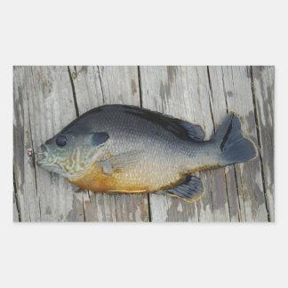 trullo púrpura amarillo azul, pescado del Lepomis Pegatina Rectangular