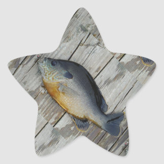 trullo púrpura amarillo azul, pescado del Lepomis Pegatina En Forma De Estrella
