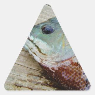 trullo púrpura amarillo azul, pescado del Lepomis Pegatina Triangular
