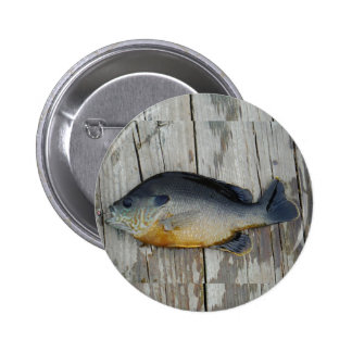 trullo púrpura amarillo azul, pescado del Lepomis  Pin